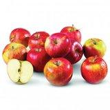Jonagold appel_